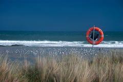 Couchette de mer Images libres de droits