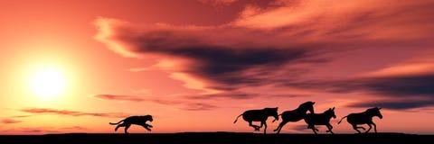 cougar κυνήγι Στοκ Εικόνα