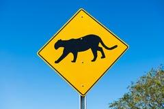 Cougar που διασχίζει το σημάδι κυκλοφορίας Στοκ Φωτογραφίες