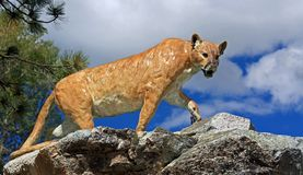 Almost a Cougar Stock Image