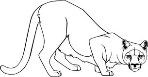 Cougar. Illustration of a coguar in ing style Stock Photography