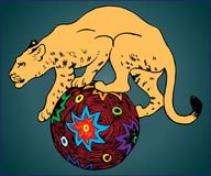 COUGAR ANIMAL ON BALL. A large predatory animal of the cat family on a multi colored ball Royalty Free Stock Image