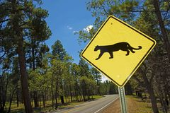 Cougar Crossing Royalty Free Stock Image