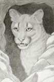 Cougar face portrait. Hand drawing of cougar in  the hole Royalty Free Stock Photography