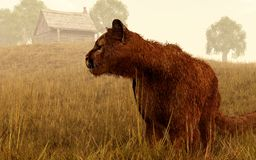 Cougar in a Field stock illustration
