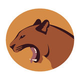 Cougar head vector illustration style Flat. Side Royalty Free Stock Image