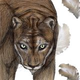 Cougar illustration drawn with pen and digital color vector illustration