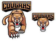 Cougar mascot. Vector of cougar mascotm the head is separated Stock Photos