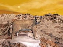 Cougar in the mountain - 3D render Royalty Free Stock Photo