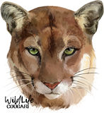 Cougar watercolor illustration Stock Photography