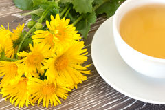 Cough tea with coltsfoot Stock Photos