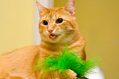 Coughing cat. Playing orange cat with glossy button eyes coughs a green feather. She's showing her tongue Stock Photos