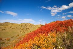 Coulees in Fall Stock Photos