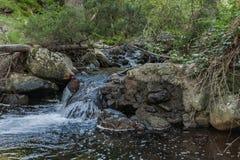 ?coulements d'eau au printemps photo libre de droits