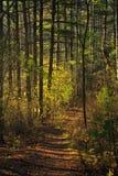 Couler léger dans la forêt d'automne Photographie stock libre de droits