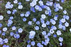 Couleur bleue Photos stock