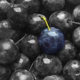 Couleur bleue de prune de texture de fond sur juteux mat doux de fruit monochrome noir et blanc de fruit beau photographie stock