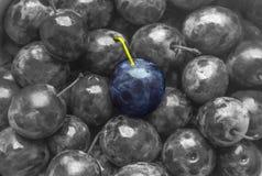Couleur bleue de prune de texture de fond sur juteux mat doux de fruit monochrome noir et blanc de fruit beau photos libres de droits