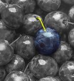 Couleur bleue de prune de texture de fond sur juteux mat doux de fruit monochrome noir et blanc de fruit beau photographie stock libre de droits