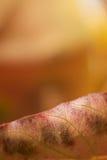 Couleur d'automne Photographie stock libre de droits