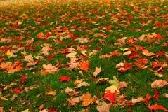 Couleur d'automne en Nouvelle Angleterre Image stock