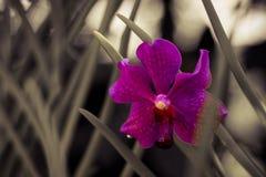Couleur d'une orchidée Image stock