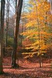 Couleur dans l'automne Photos libres de droits