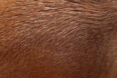 Couleur de caramel de texture de cheveux de chien images libres de droits