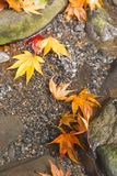 Couleur de changement de feuilles d'automne photos libres de droits