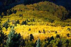 Couleur de chute, arbres de tremble et feuilles Photographie stock libre de droits