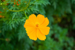 Couleur de fleur photos libres de droits