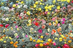 Couleur de fleur images libres de droits