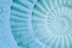 Couleur de fossile préhistorique d'ammonite Photographie stock libre de droits