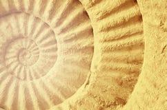 Couleur de fossile préhistorique d'ammonite Photo libre de droits