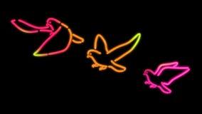 Couleur de pigeon de lumière de Nero Image libre de droits