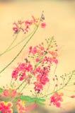 Couleur de vintage de fleur Photos libres de droits