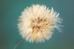 Couleur de vintage et centre mou de fin vers le haut d'herbe de fleurs pour le fond photos libres de droits