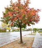 Couleur des automnes pendant le ciel obscurci Photographie stock libre de droits