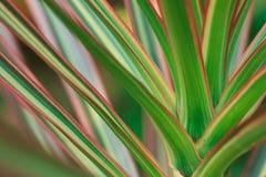 Couleur des feuilles image stock