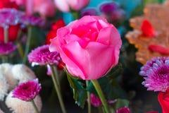 Couleur en pastel de fleur rose de vintage au modèle et à la texture créatifs image libre de droits