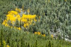 Couleur et neige de chute dans le Colorado photographie stock
