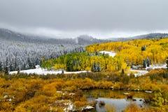Couleur et neige de chute dans le Colorado photos libres de droits