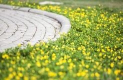 Couleur jaune de fleur Photographie stock