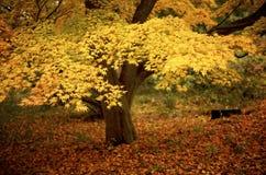 Couleur jaune lumineuse d'automne photo stock