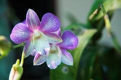 Couleur lumineuse d'orchidée photographie stock libre de droits