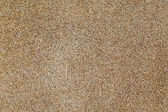 Couleur naturelle de fond de texture de mur de gravier Image stock