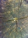 Couleur noire et blanche de vieille texture en bois photographie stock libre de droits