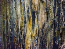 Couleur noire et blanche de vieille texture en bois photo libre de droits