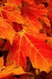 Couleur orange de flambage image libre de droits
