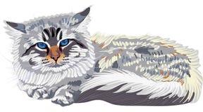 Couleur-point sibérien de chat de croquis (Neva Masqu illustration libre de droits